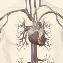 cardiovascular-4b9c934c774a1009a019644879b5ff5a.jpg